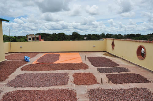 Drying beans from the wild harvest on the roof in Trinidad. All from the same harvest but collected, fermented and dried by various people, hence variation In colour.
