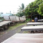 Drying cocoa beans