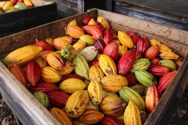 Hawaii: A Chocolate Paradise