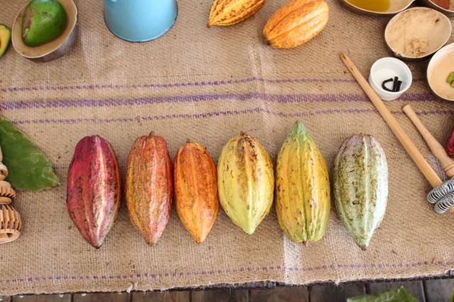 Cacao Rainbow