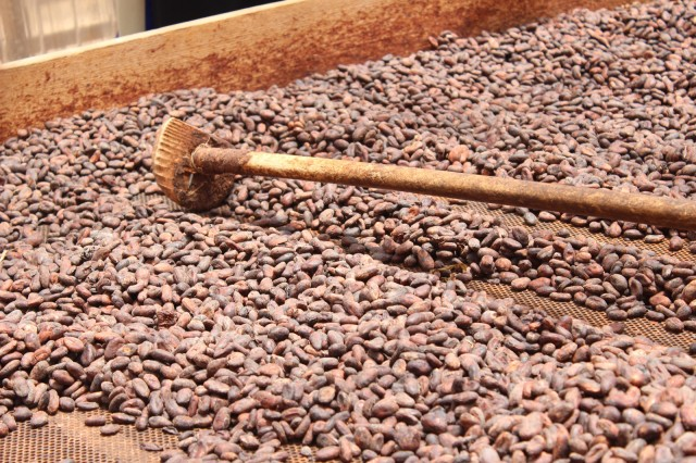 A rabot, turning cocoa beans